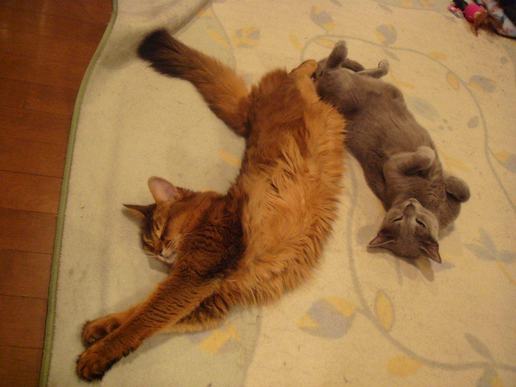 12年前の鼠年のときのローズとデイジー