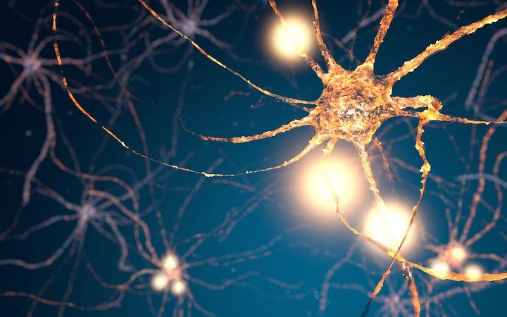 脳神経細胞の写真