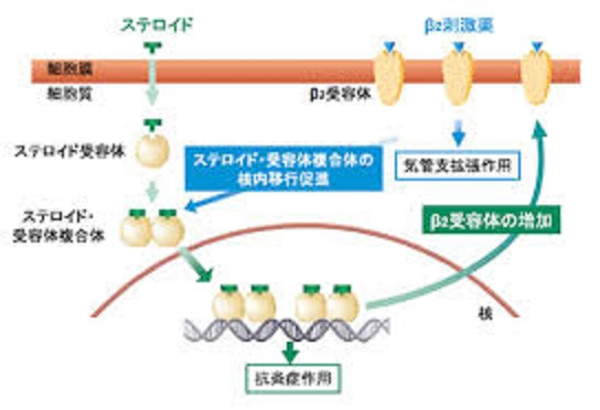 ステロイドとβ2刺激薬の相互作用増強の説明図