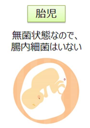 生まれたての赤ん坊は腸内細菌を有していないことを示す図