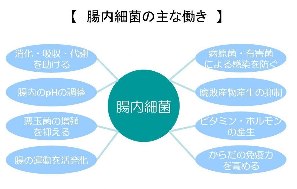 腸内細菌叢の働きについて示した図