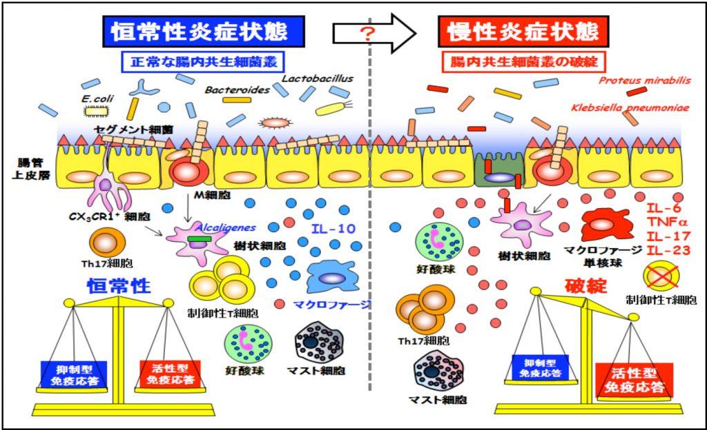 腸管バリアの破綻により炎症性腸疾患や敗血症が生ずることを示す図