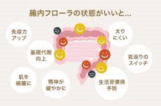 腸内細菌叢形成への食事・生活習慣の影響