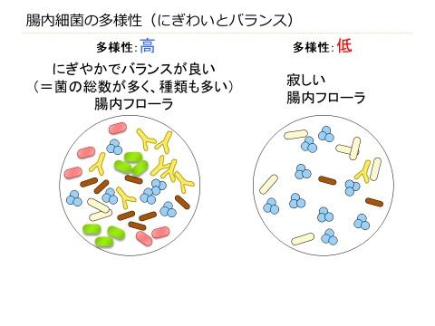腸内細菌叢の多様性についてまとめた図