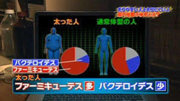 肥満者ではFirmicutes門が多いことを示すグラフ