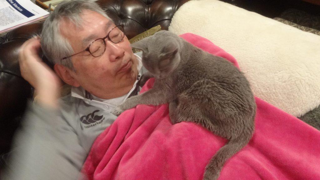 ピンクの毛布の上に寝るデイジー