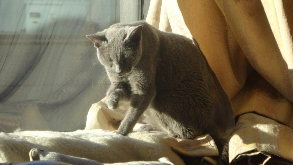 日光浴しながら顔を洗うデイジー