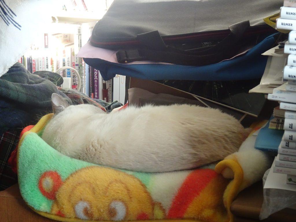 タオルケットの上で横になって寝る楓