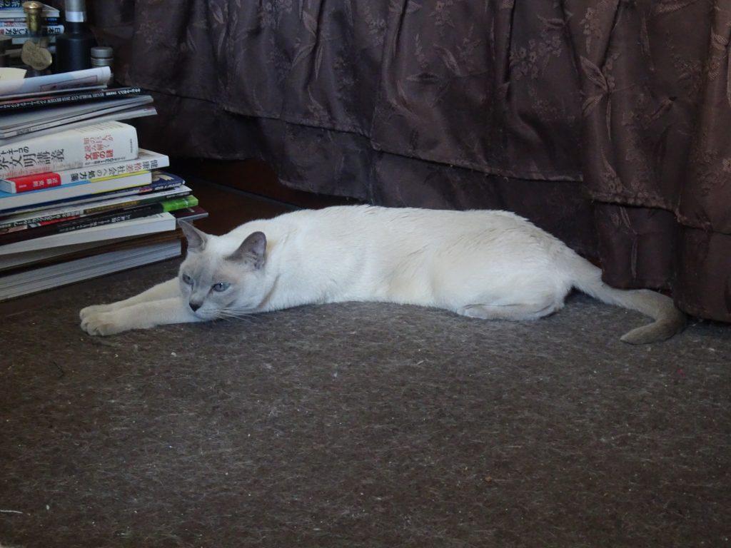 ホットカーペットの上で思い切り身体を伸ばして寝る楓