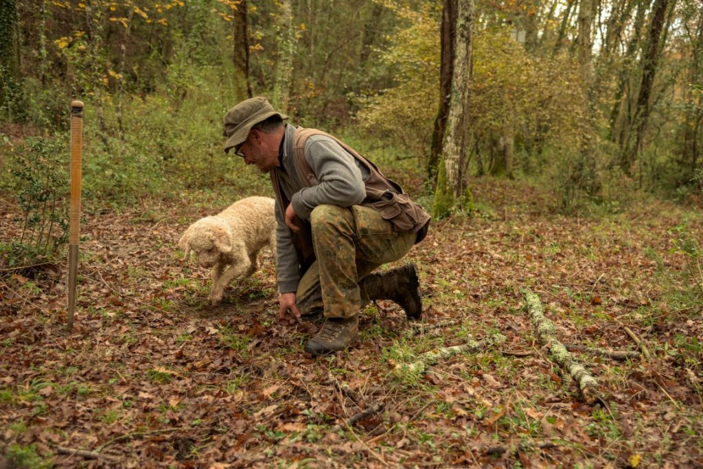土を掘るトリュフ犬