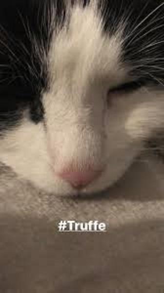 トリュフに無関心なネコ
