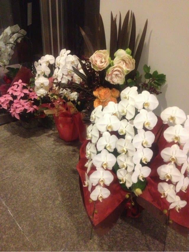 お店の前に並んだ蘭の鉢植え