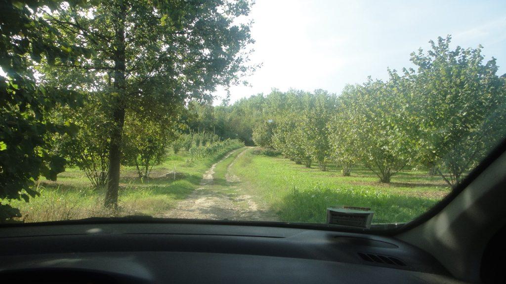 森に入る車