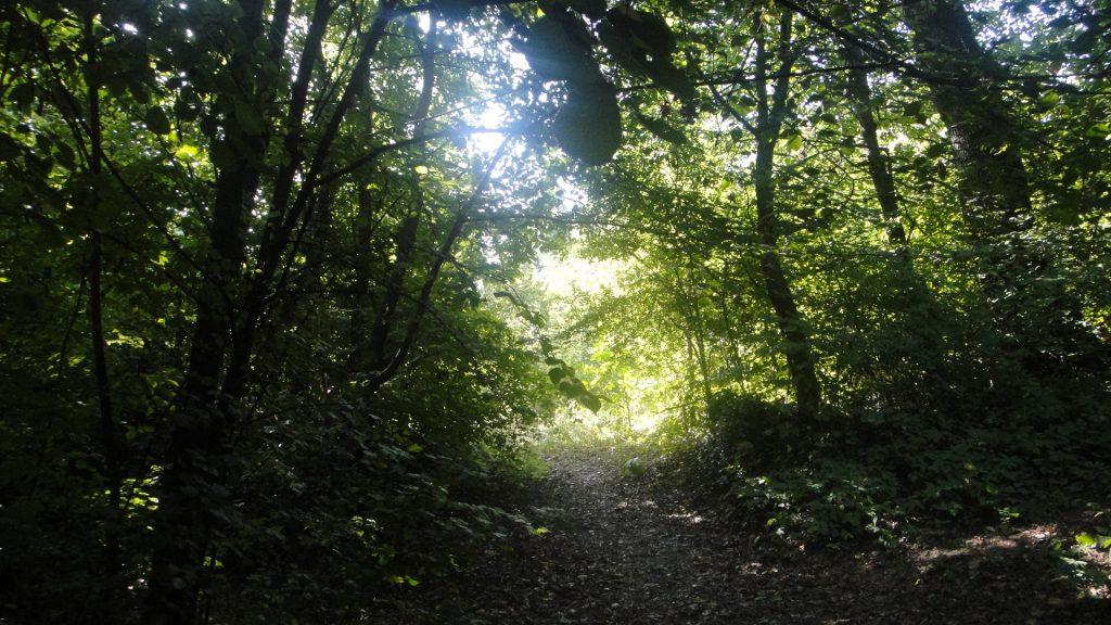 深い森の中の光景
