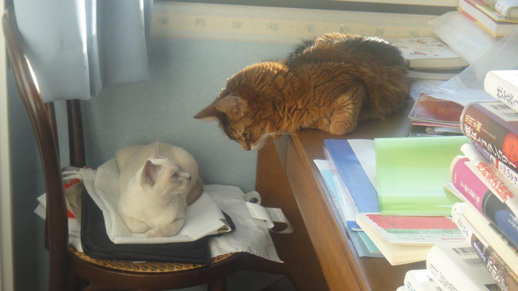 ふたりで相談しているように見えるローズと楓