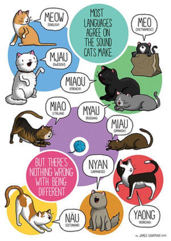 世界のネコの鳴き声を示したポスター
