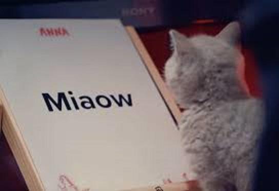 ミアと鳴くネコの姿