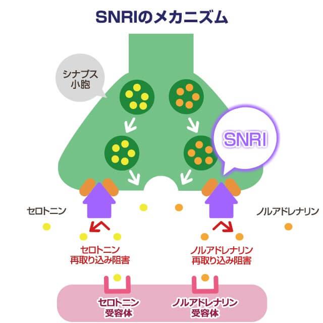 セロトニン ノルアドレナリン再取り込み阻害薬の作用機序を示す図
