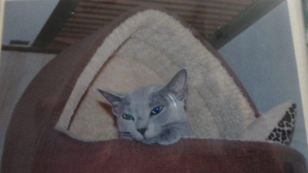 高いところが好きなネコ