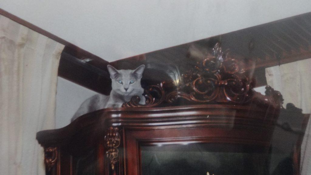 飾り棚の上で寝るデイジー