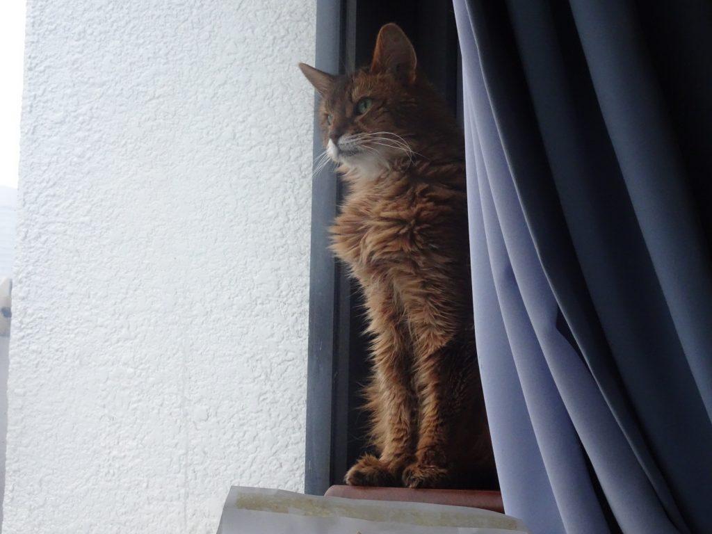 窓の外を眺めるローズ