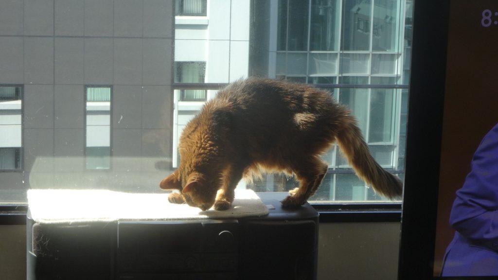 窓際の日光浴スペースに移動するローズ