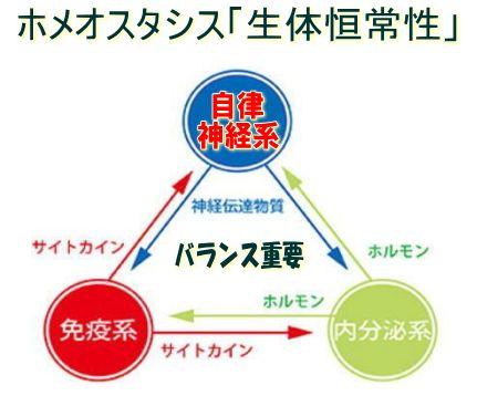 ホメオスタシスの説明図