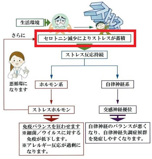 セロトニン減少とストレスの関係を説明する図