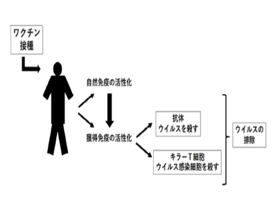 宮坂先生の仮説図