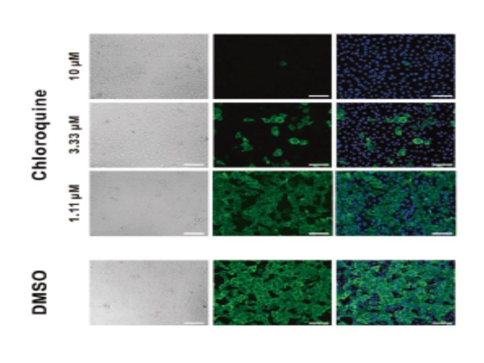 クロロキンのウイルス増殖抑制効果を示す図