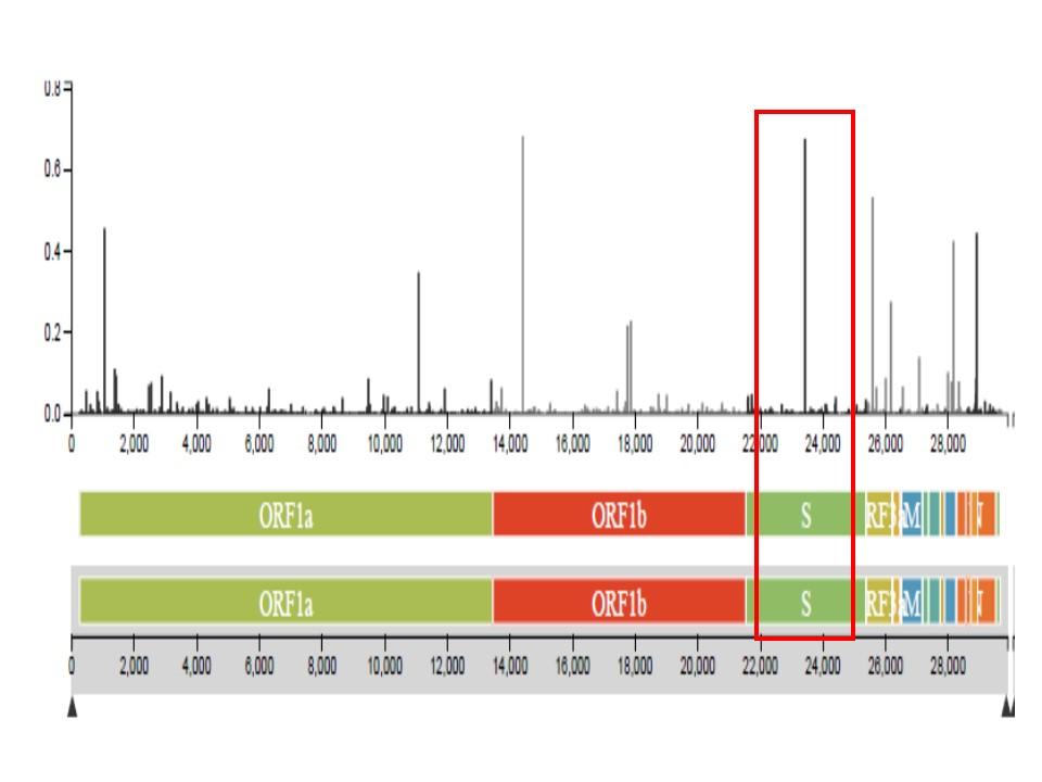 スパイクタンパクを作る遺伝子が高頻度に変異していることを示す図