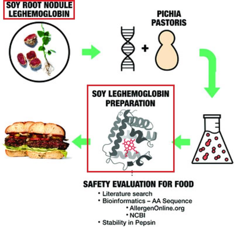 大豆レグヘモグロビンの製造過程を説明する図