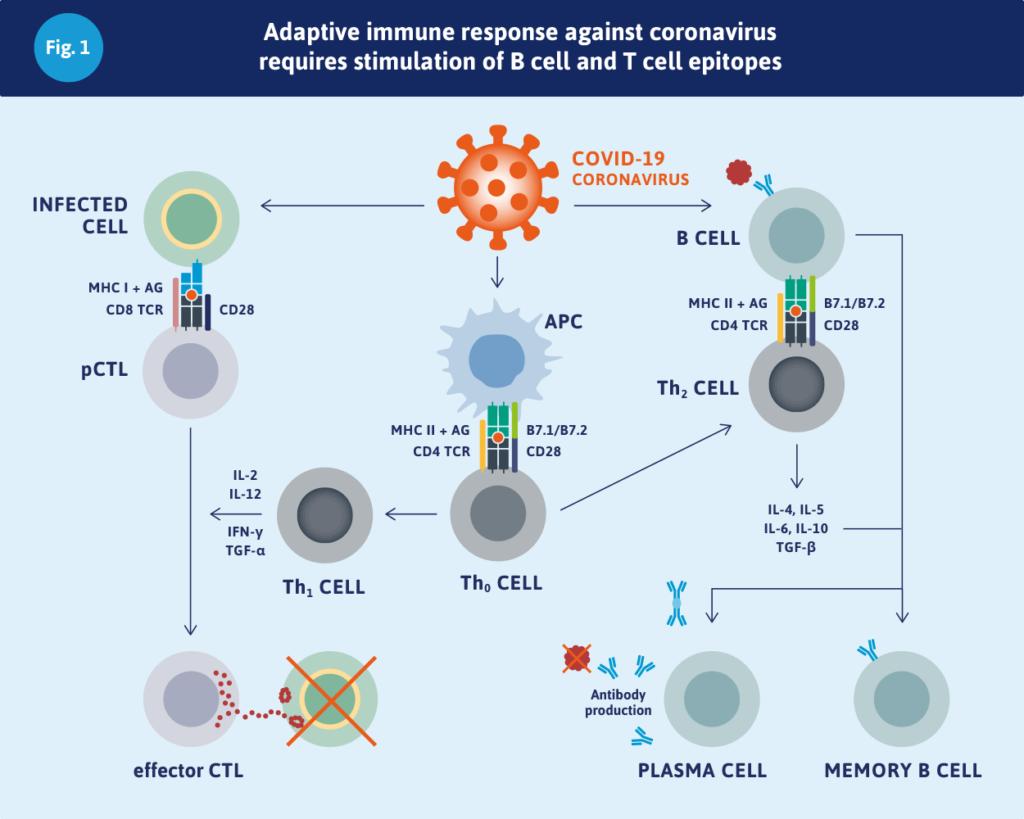 感染免疫について説明する図