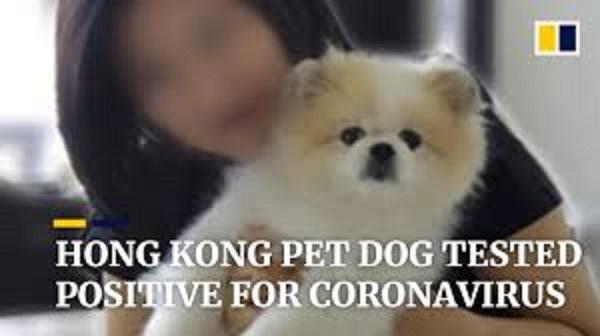 コロナウイルスに感染したイヌ