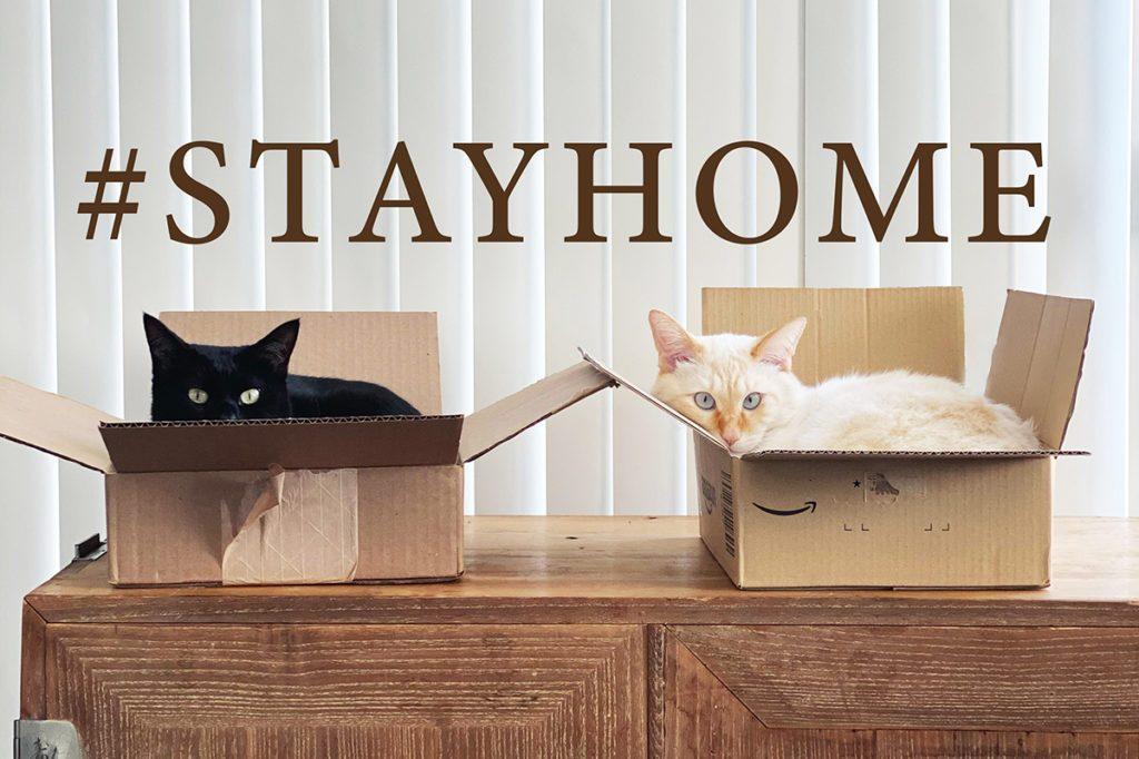 stay homeするネコ