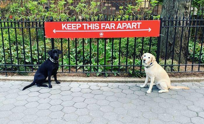 他のイヌと2メートル以内に近づけさせないことを推奨するポスター