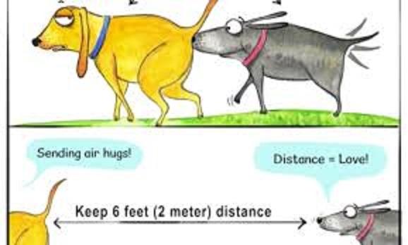 散歩中に他のイヌのお尻を嗅ぐイヌ