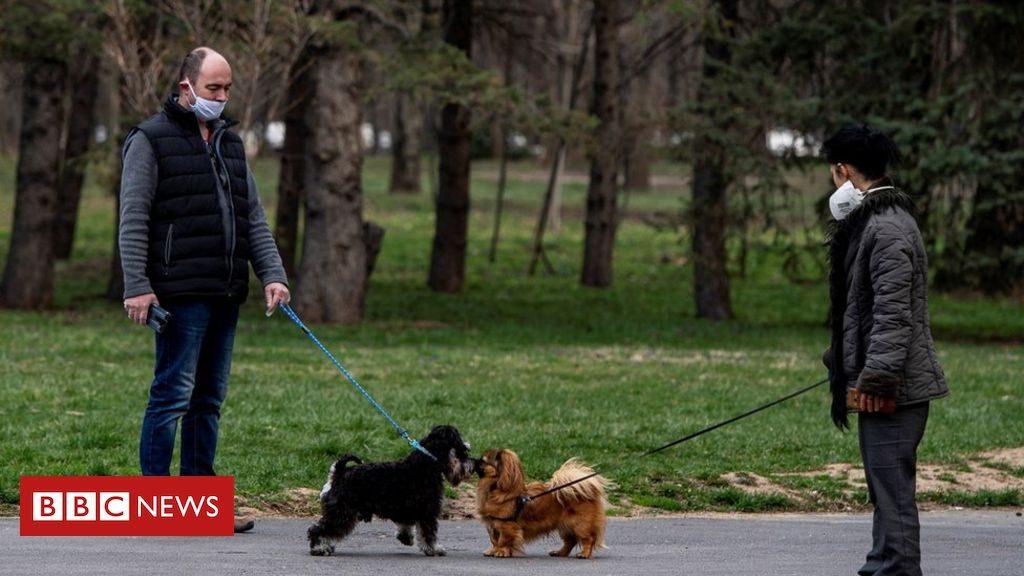 散歩中に交流するイヌ同士