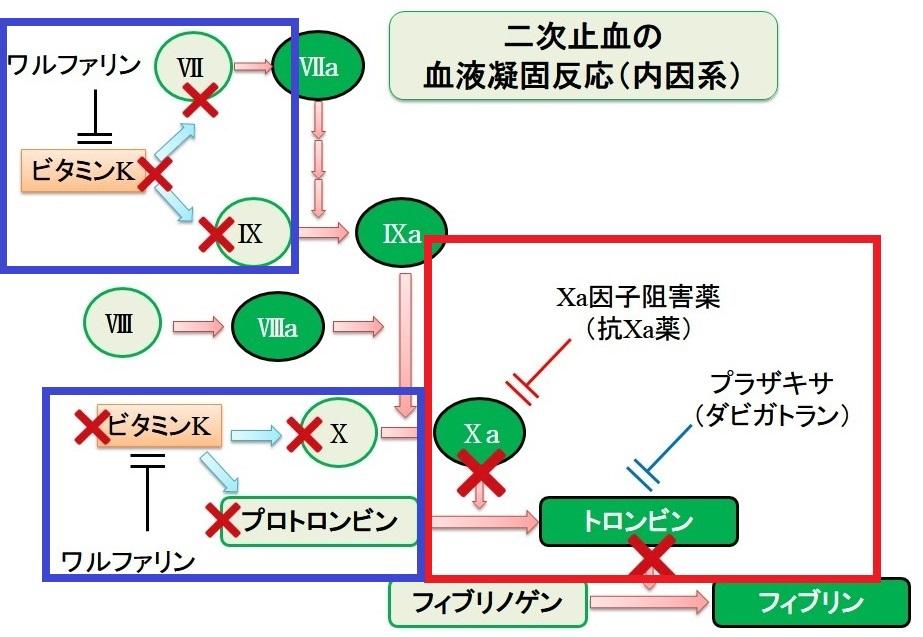 ワルファリンの作用を示す図