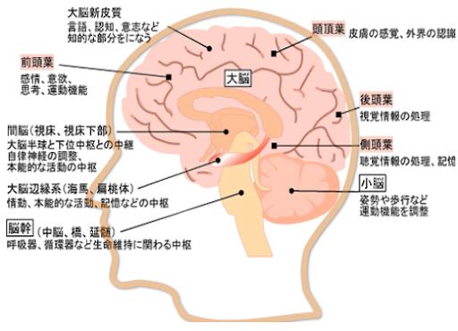 脳の機能の局在を説明する図