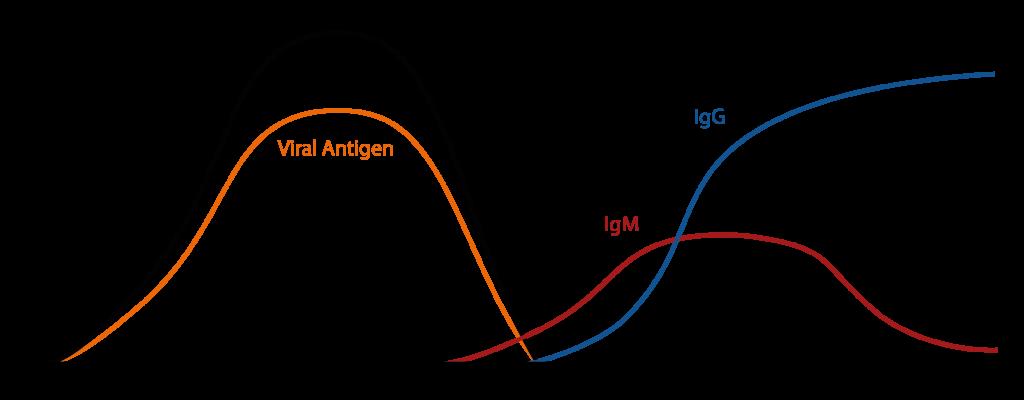 ウイルス IgM抗体 IgG抗体の出現時期の違いを示す図