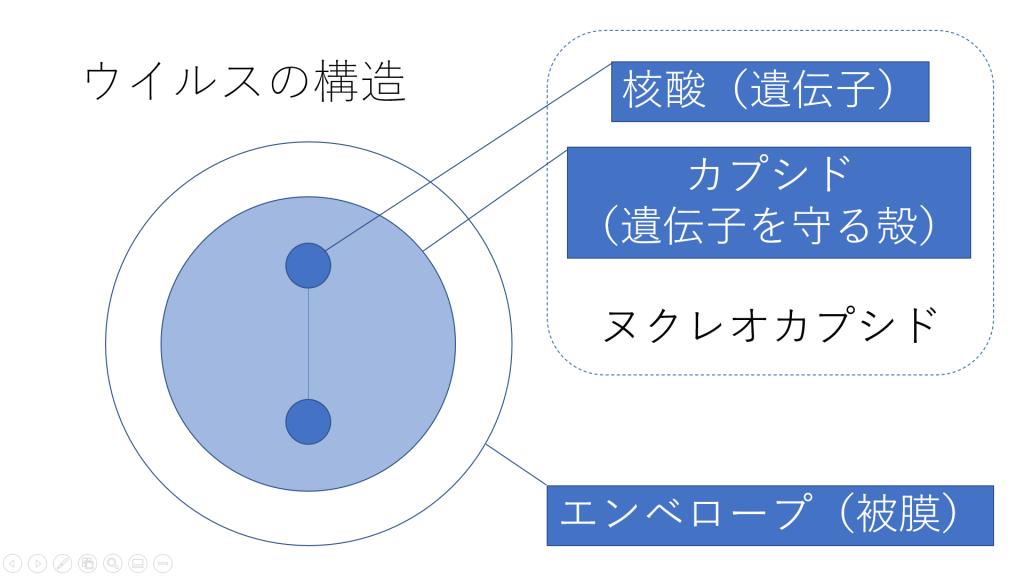 カプシドについて説明する図