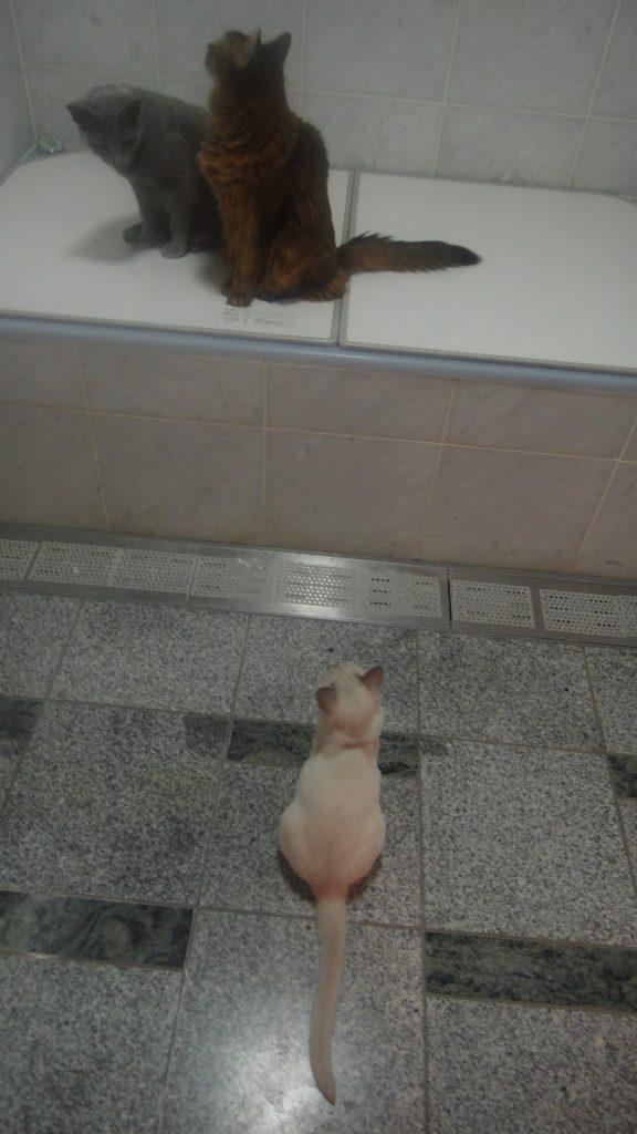 ローズとデイジーがいたお風呂場に入ってきた楓