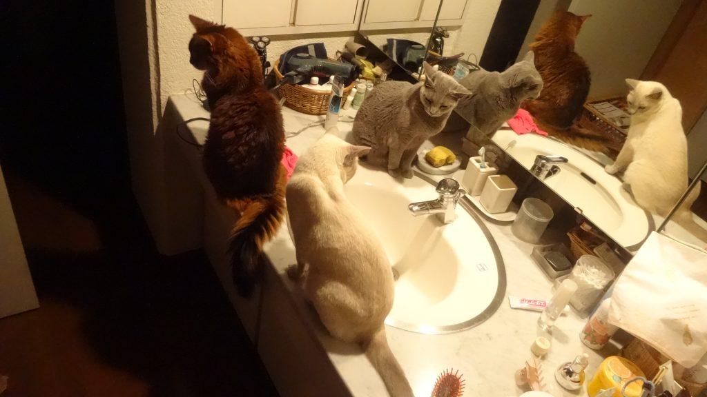 洗面台での集合写真