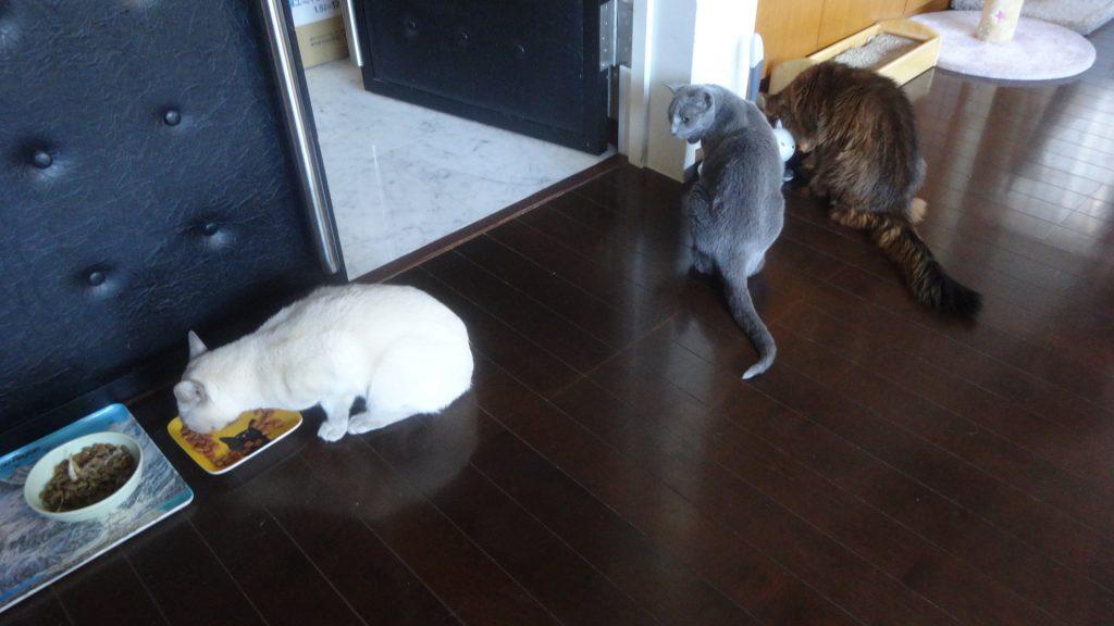 3匹が一緒にご飯を食べているところ