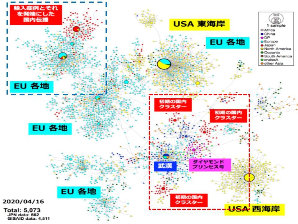3月以降はヨーロッパハプロタイプのウイルスが多いことを示す図