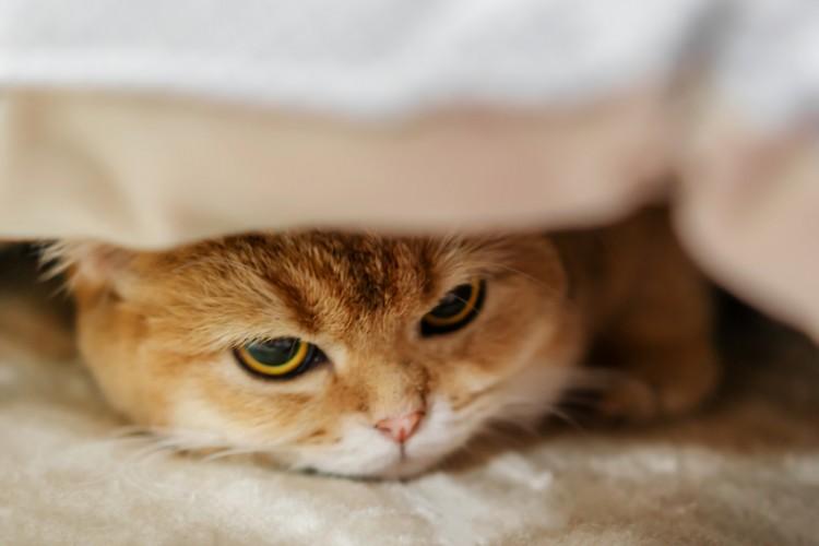 ストレスを感じているネコ
