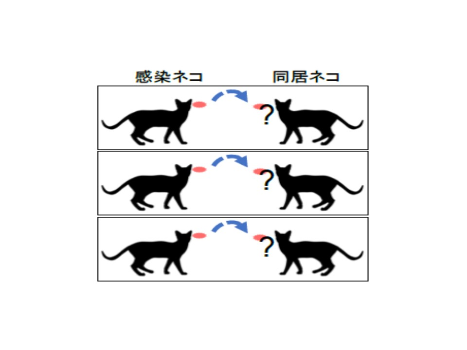 ネコからネコへの感染を示すイラスト