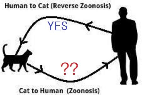 ネコからヒトへの感染の可能性を示すイラスト