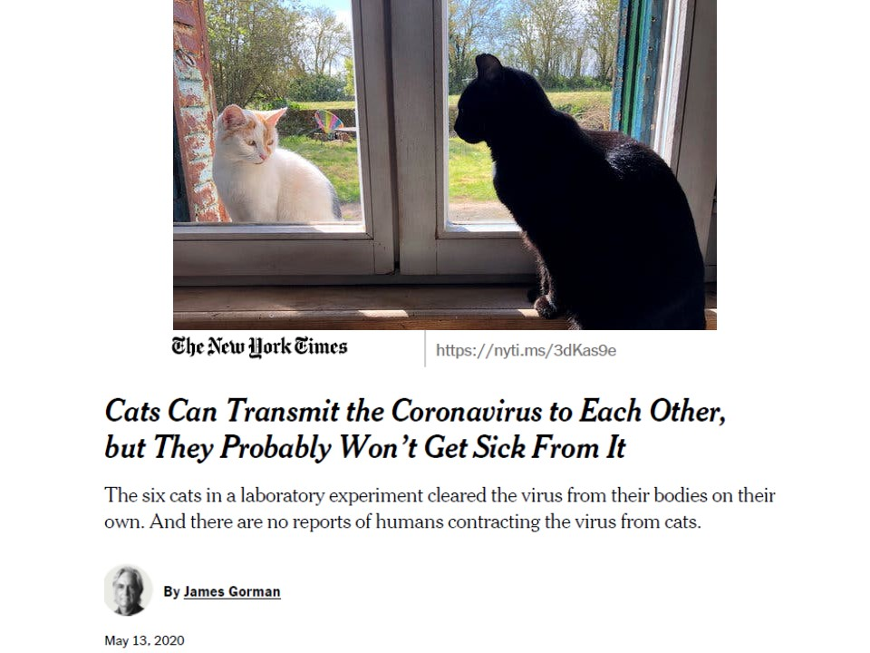 論文のことを報じるニューヨークタイムス